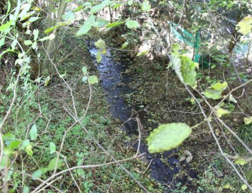 Trockenheit bedroht Bäche und kleine Flüsse – kein Wasser aus Bächen abpumpen!