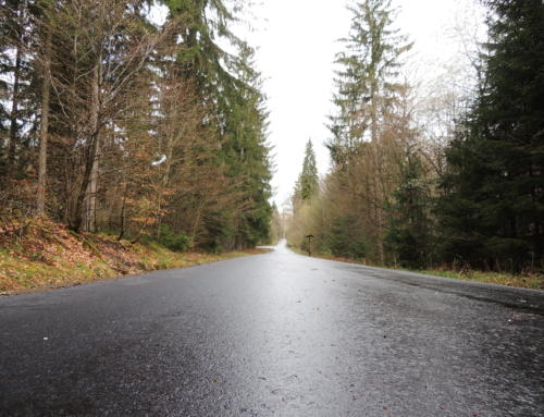 Bauarbeiten im Buchwald sind abgeschlossen